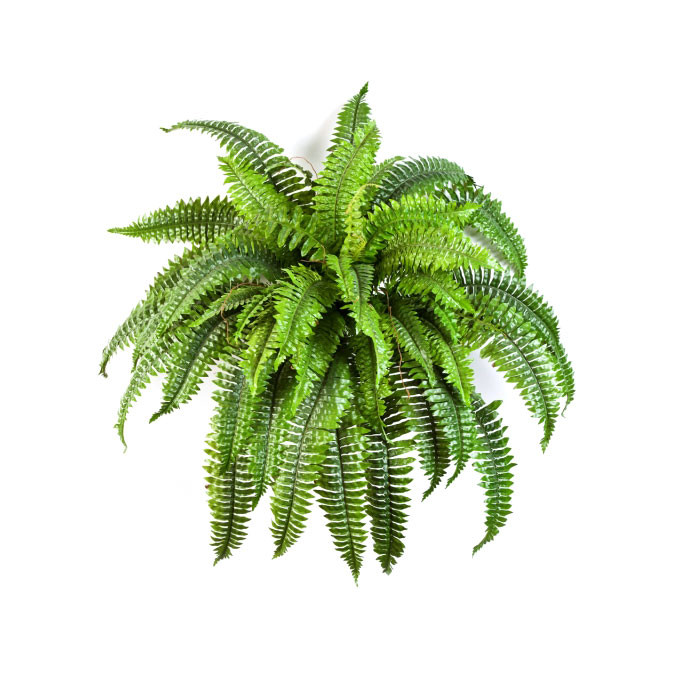 Plantas e Arvores Artificiais - Fetos e Relvas | Darden | Importação, Produção e Comercialização de Plantas e Árvores Artificiais