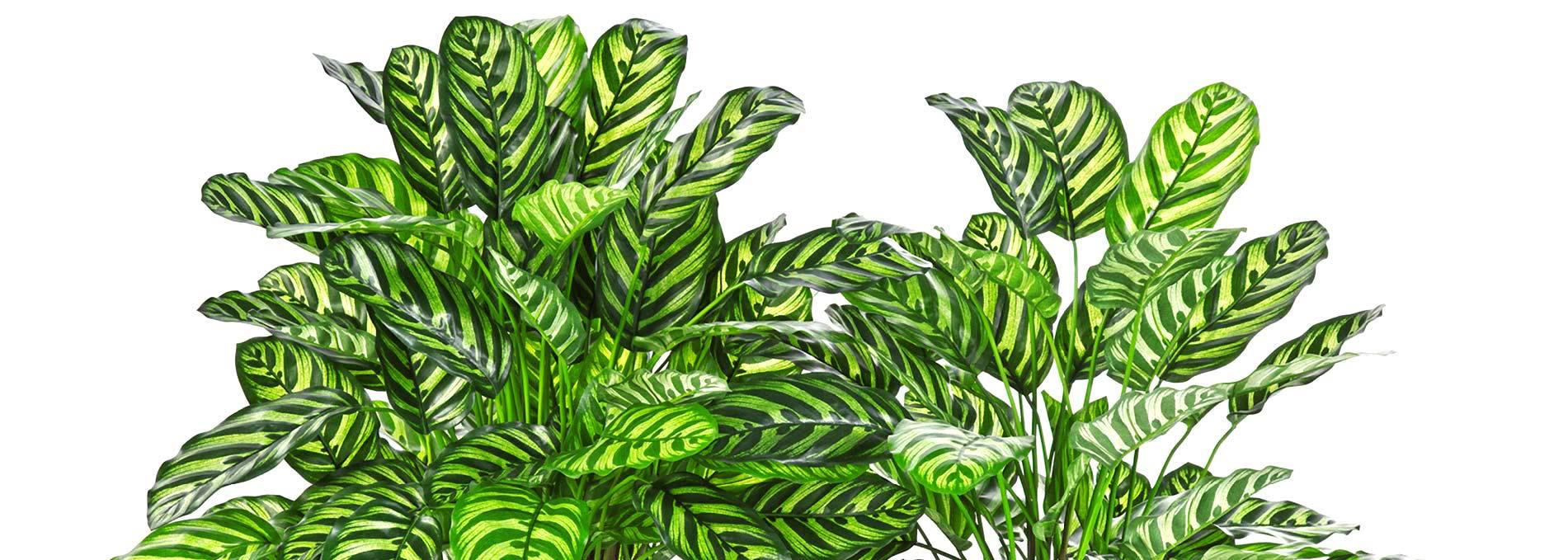 Darden-Importacao_Producao_Comercializacao-de-Plantas-e-Arvores-Artificiais_Banner-12