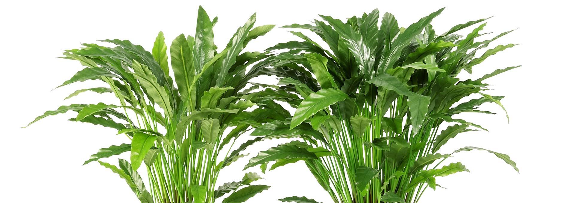 Darden-Importacao_Producao_Comercializacao-de-Plantas-e-Arvores-Artificiais_Banner-2