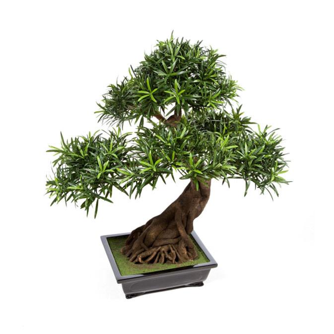 Darden | Importação, Produção e Comercialização de Plantas e Árvores Artificiais – Bonsai Podocarpus