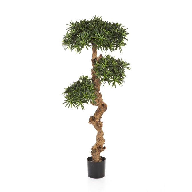 Plantas e Árvores Exóticas