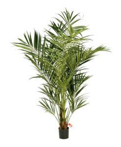 Darden | Importação, Produção e Comercialização de Plantas e Árvores Artificiais - Plantas e Árvores Exóticas - Palmeiras