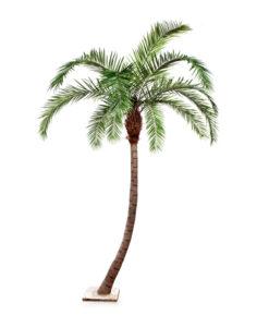 Darden | Importação, Produção e Comercialização de Plantas e Árvores Artificiais - Plantas e Árvores Exóticas - Palmeira Phoenix Curva