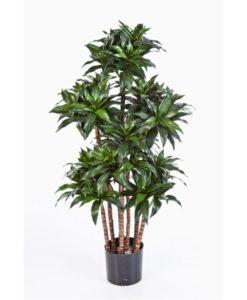 Plantas Artificiais - Dracaena Compacta| Darden | Importação, Produção e Comercialização de Plantas e Árvores Artificiais