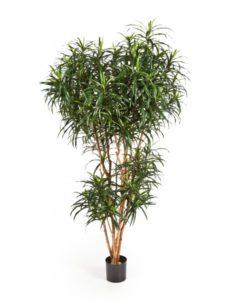 Plantas Artificiais - Dracaena Reflexa Anita| Darden | Importação, Produção e Comercialização de Plantas e Árvores Artificiais
