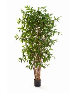 Plantas Artificiais - Dracaena Surculosa | Darden | Importação, Produção e Comercialização de Plantas e Árvores Artificiais
