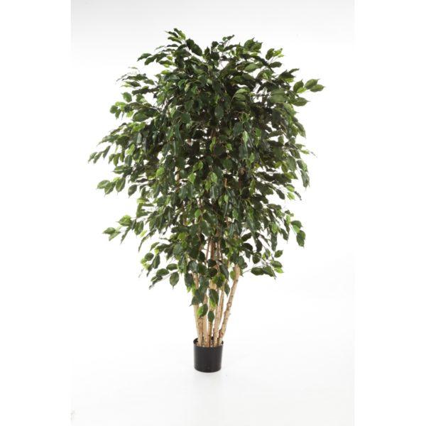 Darden | Importação, Produção e Comercialização de Plantas e Árvores Artificiais – Ficus Multitrunk