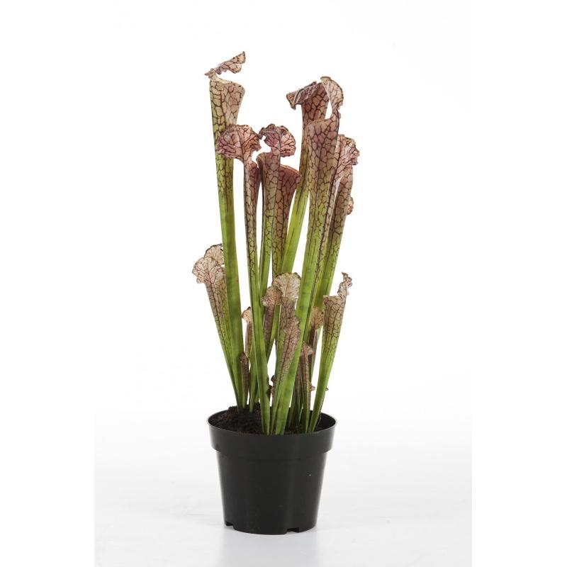 Plantas e Arvores Exoticas - Sarracenia | Darden | Importação, Produção e Comercialização de Plantas e Árvores Artificiais