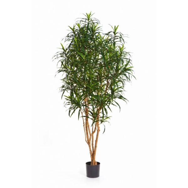 Plantas Artificiais - Dracaena Anita| Darden | Importação, Produção e Comercialização de Plantas e Árvores Artificiais