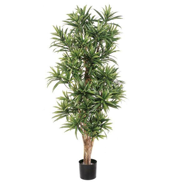 Plantas e Arvores Artificiais - Dracaena Reflexa| Darden | Importação, Produção e Comercialização de Plantas e Árvores Artificiais