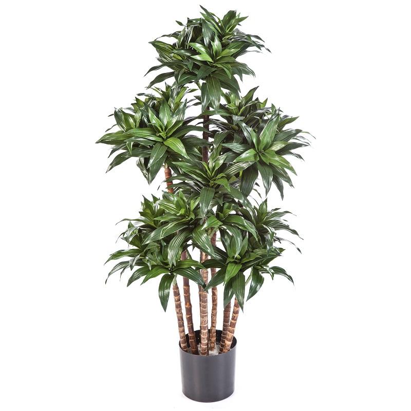 Plantas Artificiais - Dracaena Compacta   Darden   Importação, Produção e Comercialização de Plantas e Árvores Artificiais