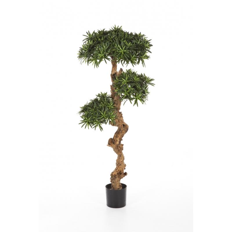 Plantas Arvores Exoticas - Podocarpus | Darden | Importação, Produção e Comercialização de Plantas e Árvores Artificiais