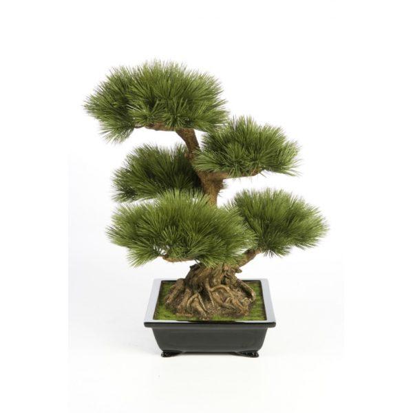 Plantas e Arvores Exoticas - Bonsai | Darden | Importação, Produção e Comercialização de Plantas e Árvores Artificiais