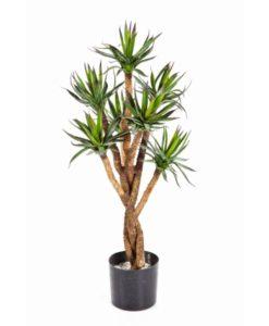 Plantas e Arvores Exoticas - Agave| Darden | Importação, Produção e Comercialização de Plantas e Árvores Artificiais