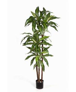 Plantas Artificiais - Dracaena Fragrans | Darden | Importação, Produção e Comercialização de Plantas e Árvores Artificiais
