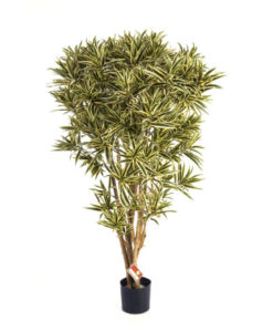 Plantas Artificiais - Dracaena Refexa Jamaica | Darden | Importação, Produção e Comercialização de Plantas e Árvores Artificiais