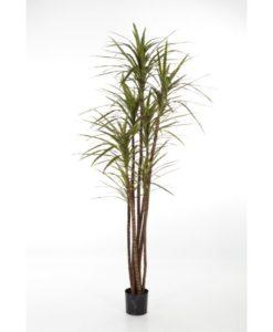 Plantas Artificiais - Dracaena Magenta | Darden | Importação, Produção e Comercialização de Plantas e Árvores Artificiais