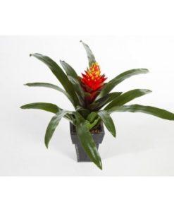 Plantas e Arvores Artificiais - Guzmania | Darden | Importação, Produção e Comercialização de Plantas e Árvores Artificiais