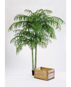 Plantas Arvores Exoticas - Palmeira Areca | Darden | Importação, Produção e Comercialização de Plantas e Árvores Artificiais