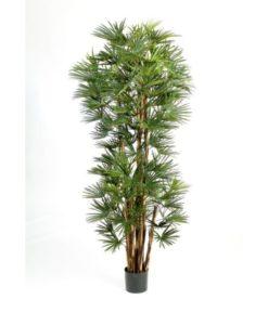 Plantas Arvores Exoticas - Palmeira Baby Fan | Darden | Importação, Produção e Comercialização de Plantas e Árvores Artificiais