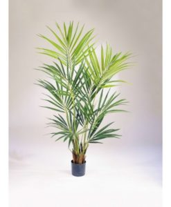 Plantas Arvores Exóticas- Palmeira Kentia | Darden | Importação, Produção e Comercialização de Plantas e Árvores Artificiais