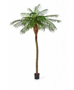 Plantas Arvores Exoticas - Palmeira Phoenix | Darden | Importação, Produção e Comercialização de Plantas e Árvores Artificiais