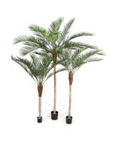 Plantas Arvores Exóticas - Palmeira | Darden | Importação, Produção e Comercialização de Plantas e Árvores Artificiais