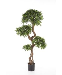 Plantas e Arvores Exoticas - Podocarpus | Darden | Importação, Produção e Comercialização de Plantas e Árvores Artificiais