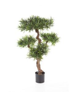Plantas e Arvores Exoticas - Podocarpus| Darden | Importação, Produção e Comercialização de Plantas e Árvores Artificiais