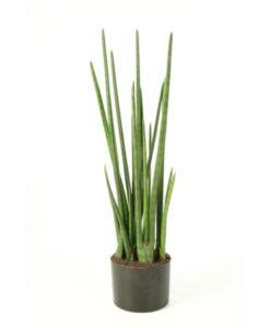 Plantas Artificiais - Sansevieria   Darden   Importação, Produção e Comercialização de Plantas e Árvores Artificiais