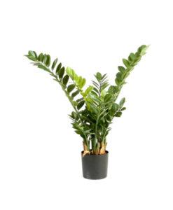 Plantas e Arvores Exotica - Smaragd Zamio | Darden | Importação, Produção e Comercialização de Plantas e Árvores Artificiais