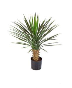 Plantas e Arvores Exoticas - Yucca| Darden | Importação, Produção e Comercialização de Plantas e Árvores Artificiais