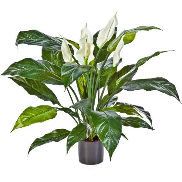 Plantas e Arvores Artificiais - Spathiphyllum | Darden | Importação, Produção e Comercialização de Plantas e Árvores Artificiais