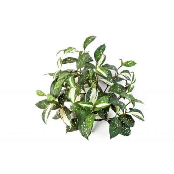 Plantas Artificiais - Fitonia | Darden | Importação, Produção e Comercialização de Plantas e Árvores Artificiais