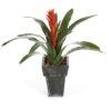 Plantas e Arvores Artificiais - Guzmania  Darden   Importação, Produção e Comercialização de Plantas e Árvores Artificiais