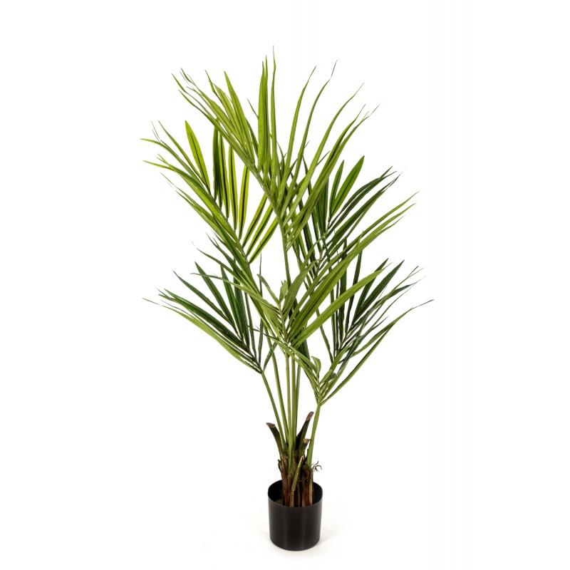 Plantas Arvores Exóticas - Palmeira Kentia   Darden   Importação, Produção e Comercialização de Plantas e Árvores Artificiais