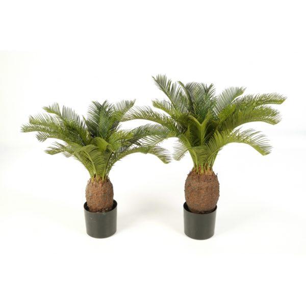 Plantas Arvores Exoticas - Palmeira Cycas| Darden | Importação, Produção e Comercialização de Plantas e Árvores Artificiais