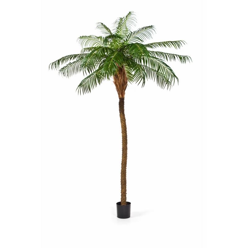 Plantas Arvores Exoticas - Palmeira Phoenix   Darden   Importação, Produção e Comercialização de Plantas e Árvores Artificiais