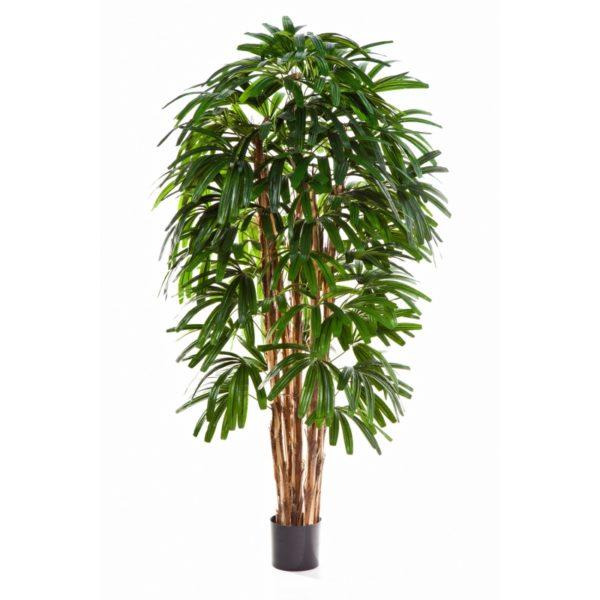 Plantas Arvores Exoticas - Palmeira Raphis | Darden | Importação, Produção e Comercialização de Plantas e Árvores Artificiais