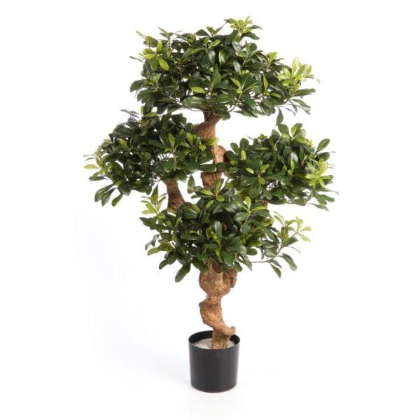 Plantas e Arvores Exoticas - Pittosporum | Darden | Importação, Produção e Comercialização de Plantas e Árvores Artificiais