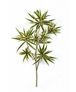 Plantas Artificiais - Haste Dracena   Darden   Importação, Produção e Comercialização de Plantas e Árvores Artificiais