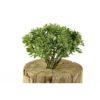 Plantas e Arvores Artificiais - Dusty Miller   Darden   Importação, Produção e Comercialização de Plantas e Árvores Artificiais - Buxus