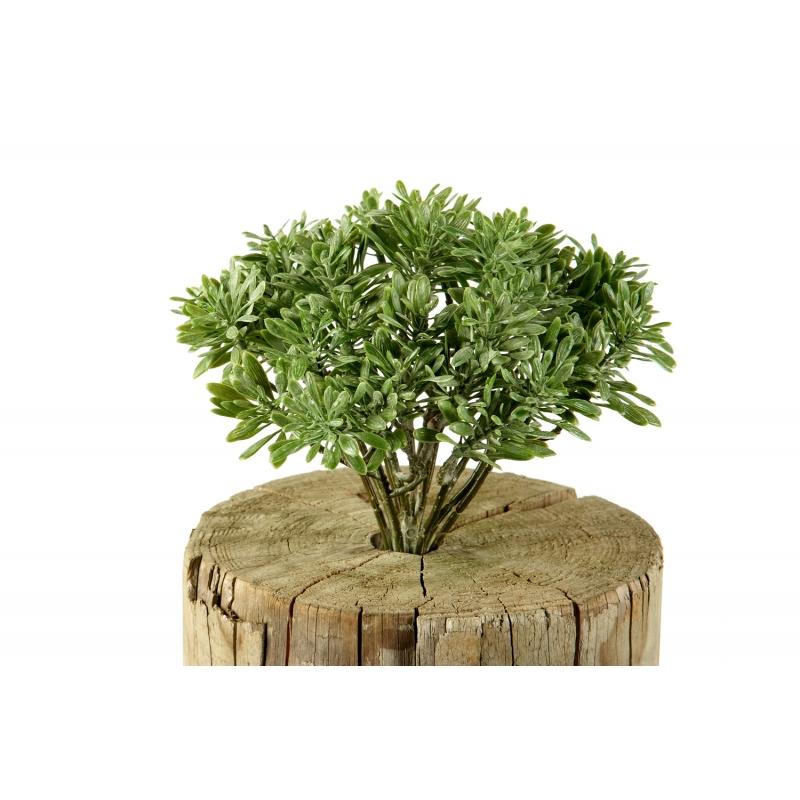 Plantas e Arvores Artificiais - Dusty Miller | Darden | Importação, Produção e Comercialização de Plantas e Árvores Artificiais - Buxus
