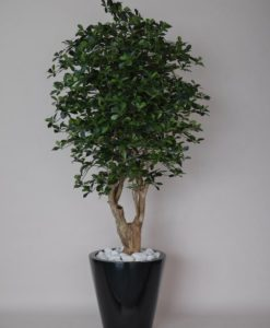 Arvores Artificiais - Black Olive | Darden | Importação, Produção e Comercialização de Plantas e Árvores Artificiais