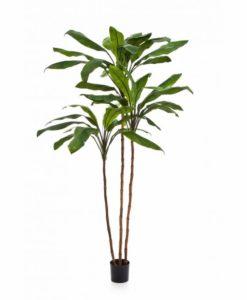 Arvores Artificiais - Cordyline Surculosa   Darden   Importação, Produção e Comercialização de Plantas e Árvores Artificiais