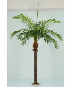 Plantas Arvores Exoticas- Palmeira Phoenix | Darden | Importação, Produção e Comercialização de Plantas e Árvores Artificiais