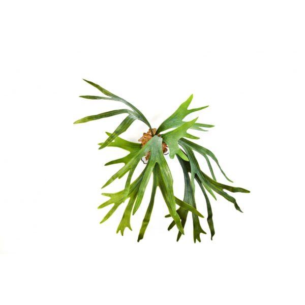 Plantas Artificiais - Staghorn Fern | Darden | Importação, Produção e Comercialização de Plantas e Árvores Artificiais
