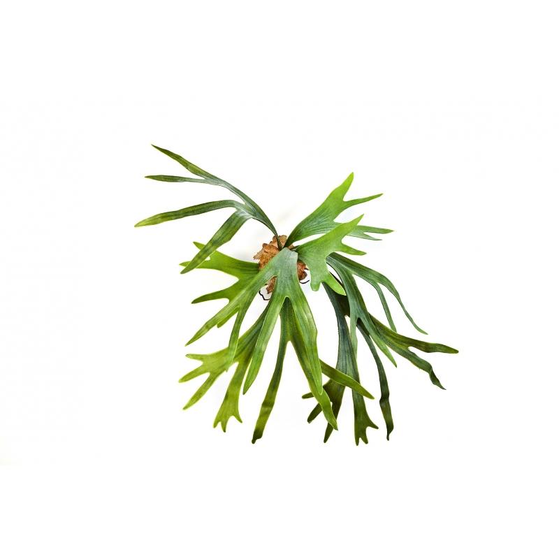 Plantas Artificiais - Staghorn Fern   Darden   Importação, Produção e Comercialização de Plantas e Árvores Artificiais