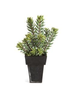 Plantas Artificiais - Sedum Cluster| Darden | Importação, Produção e Comercialização de Plantas e Árvores Artificiais