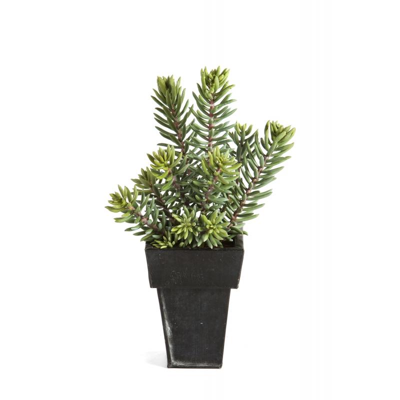 Plantas Artificiais - Sedum Cluster  Darden   Importação, Produção e Comercialização de Plantas e Árvores Artificiais